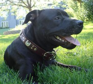 Foster Dogs 034_phixr